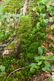 Beautiful juicy green macro forest pattern, nature carpet.  stock photo