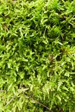 Beautiful juicy green macro forest pattern, nature carpet.  stock images