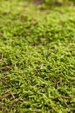Beautiful juicy green macro forest pattern, nature carpet.  stock image