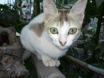 Jungle Cat. A beautiful jungle cat Royalty Free Stock Image