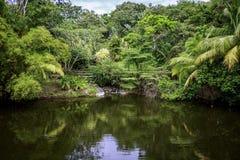 Beautiful Jungle Lake. In Roatan Honduras. Bridge in background suspended over lake Royalty Free Stock Images