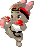 The beautiful karate bunny on a white background. The beautiful karate bunny on white gloves and bandana Royalty Free Stock Photos