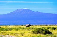 Beautiful Kilimanjaro mountain and elephant, Kenya, Africa Royalty Free Stock Image