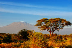Beautiful Kilimanjaro mountain after sunrise in morning, Kenya, Africa Royalty Free Stock Photography