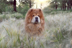 Beautiful kind dog  in a soft fluffy grass Stock Photography