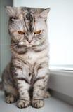 Beautiful kitten Royalty Free Stock Photography