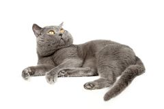 Beautiful kitten Royalty Free Stock Photo