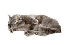 Beautiful kitten Royalty Free Stock Photos
