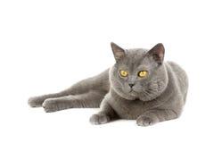 Beautiful kitten Royalty Free Stock Images