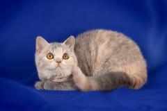 Beautiful kitten Stock Photos