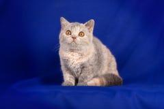 Beautiful kitten Stock Images