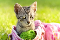 Beautiful kitten Stock Images