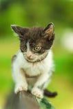 Beautiful kitten on bench Royalty Free Stock Photo