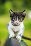 Beautiful kitten on bench Stock Images