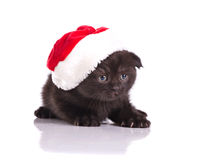 Beautiful kitten celebraiting christmas Royalty Free Stock Photos