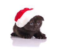 Beautiful kitten celebraiting christmas Royalty Free Stock Photos