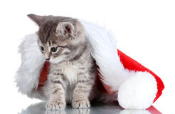 Beautiful kitten and Christmas hat Royalty Free Stock Image
