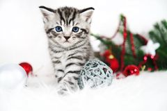 A beautiful kitten. Christmas poster with a kitten and festive decor. Royalty Free Stock Photo