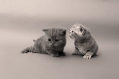 Beautiful kitten faces Stock Photography