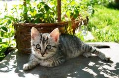 Beautiful kitten in garden Royalty Free Stock Photo