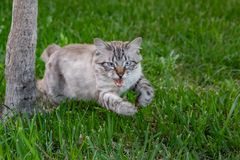 Beautiful kitten jumps out of the tree hunting. Blurred fast movement. trunk of yucca and green grass background.  stock photo
