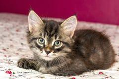 Beautiful kitten lying on the bed Stock Photos