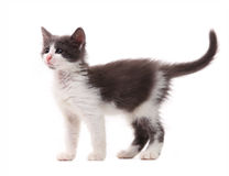 Beautiful kitten over white Royalty Free Stock Photos