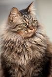Beautiful kitten portrait Royalty Free Stock Photos