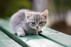 Beautiful kitten posing outdoors in summer Royalty Free Stock Image
