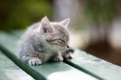 Beautiful kitten posing outdoors in summer stock image
