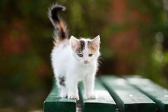 Beautiful kitten posing outdoors in summer Royalty Free Stock Images