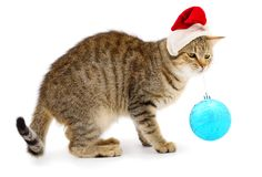 Beautiful kitten in a red Santa Claus hat royalty free stock image