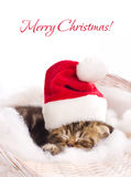 Beautiful kitten in santa claus cap Stock Image