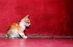 Beautiful kitten is seating on the floor stock image