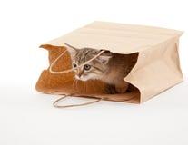 Beautiful kitten sitting in paper Royalty Free Stock Image