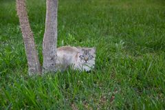 Beautiful kitten sitting under the tree waiting for prey. Trunk of yucca and green grass background.  stock photography