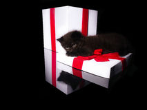 Beautiful kitten and white box with a red bow Royalty Free Stock Photo