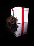 Beautiful kitten and white box with a red bow Stock Photos