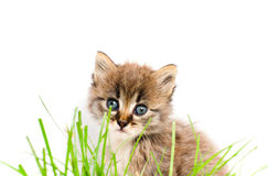Beautiful kitty Royalty Free Stock Photography