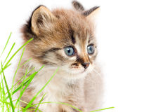 Beautiful kitty Royalty Free Stock Photos