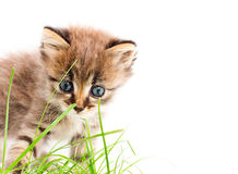 Beautiful kitty Stock Photo