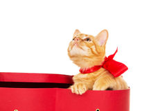 Beautiful kitty with a ribbon sits in a box Royalty Free Stock Photography