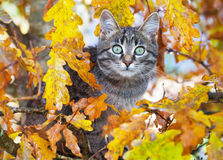 Beautiful kitty sitting on the autumn tree Royalty Free Stock Photography