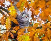 Beautiful kitty sitting on the autumn tree Royalty Free Stock Photo