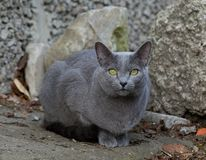 Beautiful kitty in the street royalty free stock photos