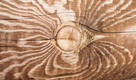 Beautiful knot on the log royalty free stock photos