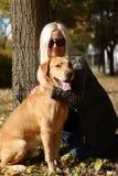 Beautiful Labrador posing Stock Images