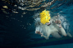 Beautiful Labrador retriever diving underwater Stock Images