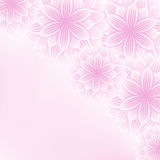 Beautiful lace floral pink background with flowers Stock Photos
