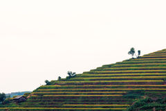 Beautiful ladder of rice terrace royalty free stock image